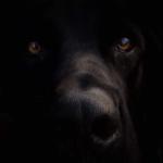 doglogofooter12