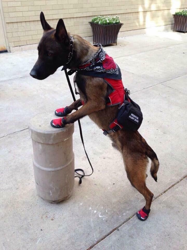 Service Dog Photo 1